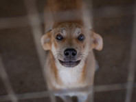 В Тверской области возбудили уголовное дело по факту гибели более 200 собак в клинике для животных