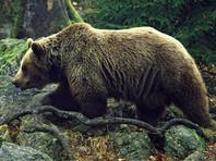 На Камчатке медведь забрел на городской рынок и напугал человека (ВИДЕО)