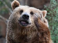 В Воронежской области полицейские застрелили медведя, который загрыз соседа и искусал хозяина