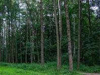По данным Дегтерева, десятки обнаруженных им рисунков выбиты в грунте посреди тайги. Многие пользователи интернета считают, что исследователь обнаружил вовсе не геоглиф, а следы тракторов и вырубки леса