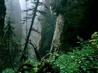 Якутские спасатели на пятый день нашли лесоруба, заблудившегося в тайге