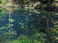 Во Владимирской области карстовое озеро ушло под землю вместе с рыбой