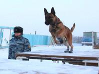 Якутских заключенных будут охранять овчарки-клоны, никогда не видевшие снег