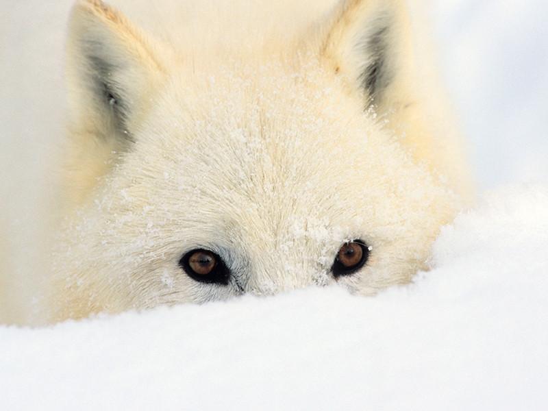 Полиция Якутии защищает владельца собаки от обвинений в жестоком убийстве животного на морозе