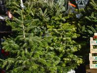 """""""Яблоко"""" обвиняет Минобороны в закупке новогодних елок """"максимальной опушенности"""" по завышенной в девять раз цене"""