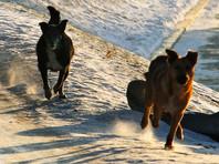 На Урале хозяевам собак, насмерть загрызших семилетнюю девочку, на 1,5 года ограничили свободу
