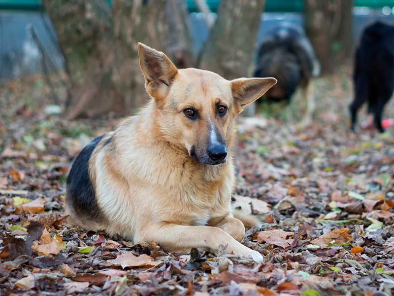 Госдума 13 декабря приняла во втором и третьем чтениях законопроект об усилении наказания за жестокое обращение с животными