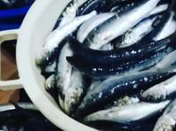 Сахалинцы ведрами и мешками собирают выброшенную на берег сельдь иваси (ВИДЕО, ФОТО)