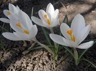 В Гидрометцентре России рассказали, когда ждать весну