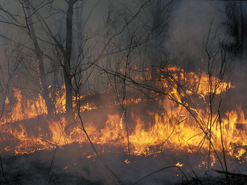 В Забайкалье начались лесные пожары, в крае уже горит более 500 гектаров леса
