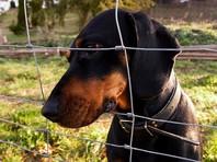 Документ предусматривает разрешение использования диких животных для натаскивания охотничьих собак только при наличии между ними специального ограждения - сетки или решетки
