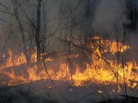 """В Забайкалье начались лесные пожары: дома и леса может спасти от огня """"только чудо"""""""