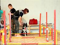 Ученикам двух школ в Красноярске разрешили ходить на уроки с собаками