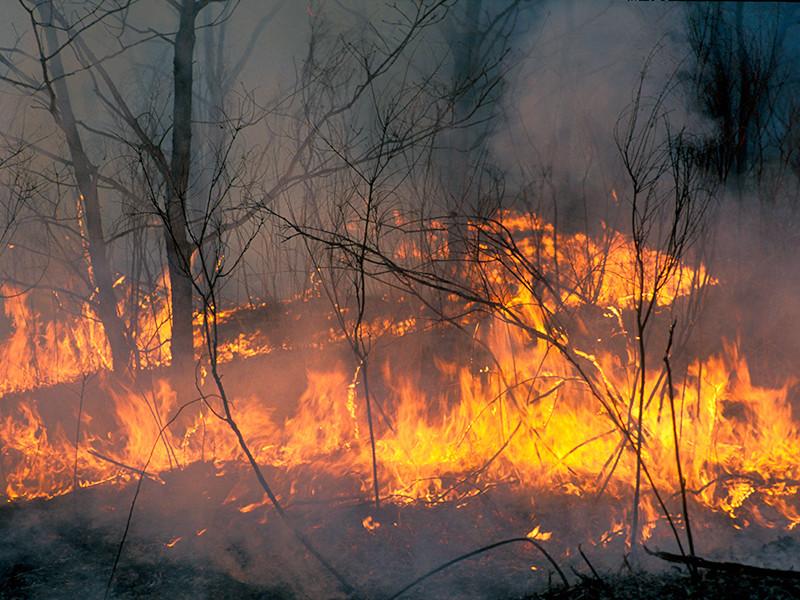 В Бурятии продолжают бушевать лесные пожары: режим ЧС введен в одном из северных районов