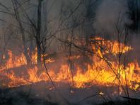 За выходные площадь лесных пожаров в России увеличилась в 10 раз