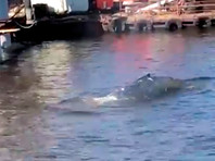 В Выборгском заливе обнаружили кита (ВИДЕО)