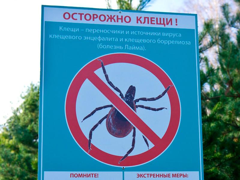 Власти Медвежьегорска запретили проводить пикет в городском парке из-за клещей