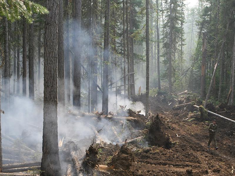 В Красноярском крае власти решили не тушить лесных 13 пожаров: затраты на борьбу с огнем превысят возможный вред, который он может причинить. Тем не менее ситуация с пожарами в регионе находится по контролем