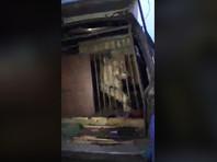 На Челябинской парковке нашли автомобиль со львицей, питонами и пуделями