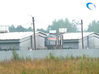 В райцентре под Великим Новгородом уничтожили более 5 тыс. свиней из-за вспышки АЧС