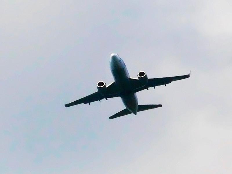 Собака открыла багажный отсек самолета в небе над Москвой