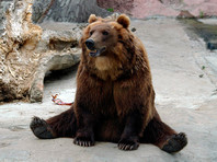 ФСБ предложила признать медведей стратегически важным ресурсом России
