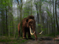 В Якутии найдена уникальная туша небольшого взрослого мамонта