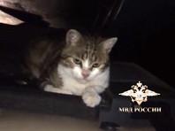 В Тульской области кот, к которому хозяева привязали наркотики, стал фигурантом уголовного дела