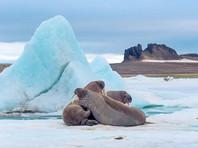 В Арктике появилась новая угроза экологии - местный мусор