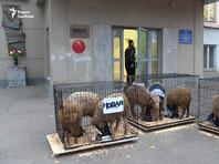 """К зданию редакции """"Новой газеты"""" привезли клетки с овцами в жилетах с надписью """"пресса"""""""