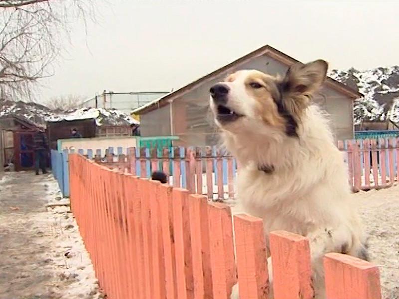 На северо-западе Москвы сгорел центр реабилитации животных, 30 из них погибли
