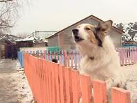 На северо-западе Москвы сгорел центр реабилитации  животных, 30 из них погибли (ФОТО, ВИДЕО)
