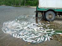 В Совбезе назвали незаконную ловлю рыбы угрозой для экономики России