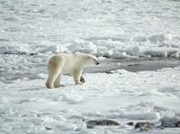 """В правительстве РФ обнародовали планы по развитию Арктики, которые оппозиция назвала """"захватом"""""""