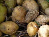СК возбудил уголовное дело после поставки Росгвардии гнилой картошки