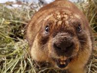 В Москве наступила весна: в зоопарке после 5-месячной спячки проснулись сурки