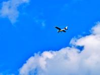 В Псковской области военные принудительно посадили самолет, ошибочно принятый за нарушителя госграницы