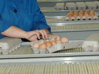 Специалисты не обнаружили в яйцах сальмонеллу и другие патогенные микроорганизмы, тяжелые металлы, пестициды, антибиотики и гормоны, повышенное количество микроорганизмов и бактерий группы кишечной палочки