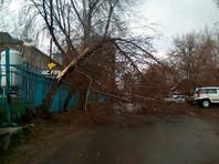 В Новосибирске 8-летнюю девочку высадили из автобуса во время сильной бури