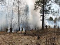 В российских регионах не утихают лесные пожары: огонь охватил больше 40 тысяч га, ситуацию усугубляют погода и люди