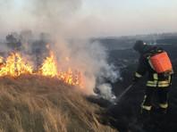"""В Иркутской области, где наибольшее число лесных пожаров в РФ, спасли """"путинские сосны"""". А граждан призвали выходить на борьбу с огнем"""