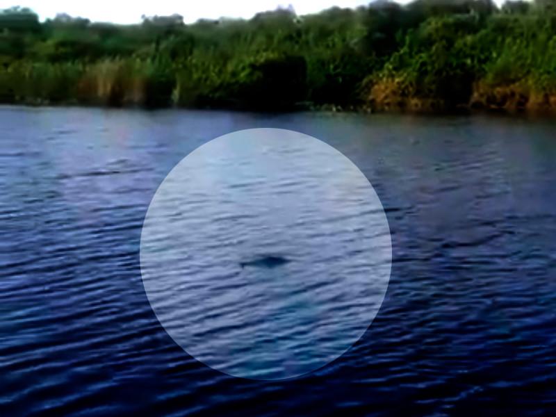 Накануне в соцсетях появилось видео с одной из рек Приморья, на котором рыбак обнаружил в воде большого крокодила