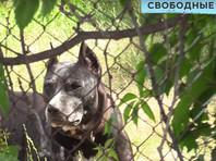 В дачном поселке в Саратовской области бойцовская собака депутата гордумы покусала женщину с ребенком. Депутат решила прикрыться мандатом