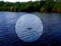 На реке в Приморье сняли на ВИДЕО крокодила, им же напугали жителей Астраханской области