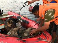В зоне паводка в Иркутской области спасли сотни животных (ФОТО, ВИДЕО)