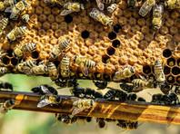 Как сообщили журналистам в пресс-службе Минсельхоза РФ, вопрос о необходимости такой меры был вновь поднят после того, как в ряде регионов РФ произошла массовая гибель пчел