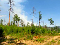 В Иркутской области в день траура в память о жертвах наводнения начал действовать новый режим ЧС. Теперь из-за лесных пожаров