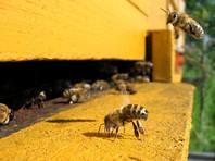 Минсельхоз предложил не делать преждевременных выводов о причинах гибели пчел и масштабах бедствия