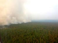 Погибшие от пожаров на севере Сибири леса будут восстанавливаться около 100 лет