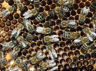 В Орловской области возбудили два уголовных дела в связи с массовой гибелью пчел